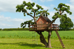 TreeHouse project planning