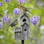 Bird House Project perfect for Springs